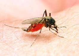 Malaria: Overview, Symptoms, Diagnosis, Treatment and Prevention